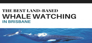 The best land based whale watching near Brisbane